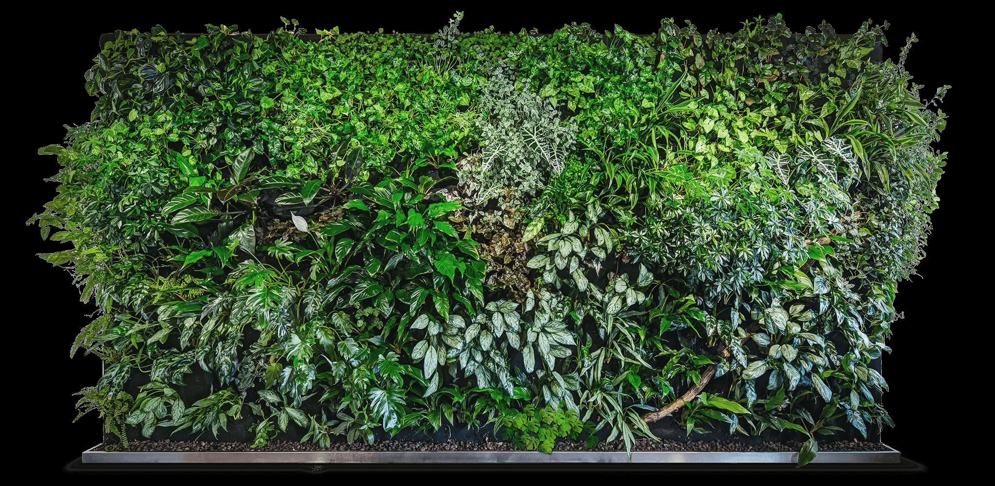 Bepflanzte Wand grüne wände florawall